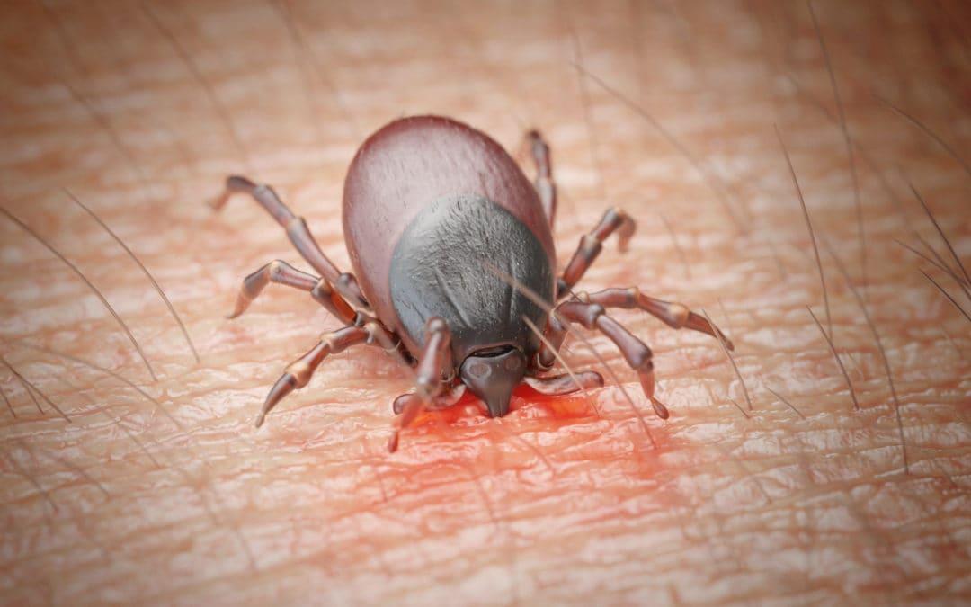 Borelioza – współczesna epidemia
